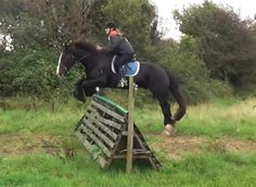 Full video: http://www.youtube.com/watch?v=T8ldLjV9wY0  Midnight is a very experienced horse that would suit any rider.