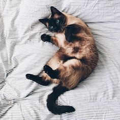 Cozy kitty. #animals #cats #cute