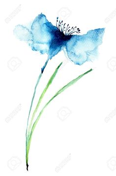 watercolour cornflower - Google Search