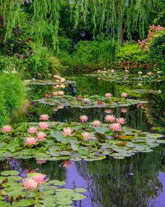 Rustic Landscaping, Garden Landscaping, Potager Garden, Beautiful Gardens, Beautiful Flowers, Water Lilies Painting, Australian Garden, Lily Pond, Nature Aesthetic