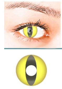 9a893ea2757 Yellow Cat Crazy Contact Lens (pair)  YC  -  24.99   Colored Contacts
