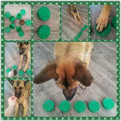 So many awesome DIY Dog Puzzles.
