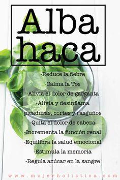 En este artículo te explicamos como usarla, sus beneficios y como sembrarla. Es súper fácil !!! http://mujerholistica.com/albahaca/ #salud #dieta #detox #albahaca #resfriado #medicina #natural #hoilstico #mujerholistica #belleza
