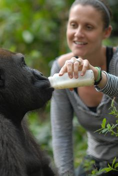 Nkan Daniel, 2009. This picture was taken by Jo-Anne McArthur shortly before Nkan Daniel and 9 other gorillas were introduced to their spacious new accommodation. This was one of the last bottles of milk for Nkan Daniel from our director Rachel Hogan, who hand reared him from 2 weeks of age. Nkan is now 11 years old and he is the dominant male in his group.  © Jo-Anne McArthur, We Animals