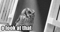 wtf owl animated GIF