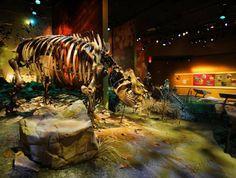 Gray Fossil Site, Gray, TN