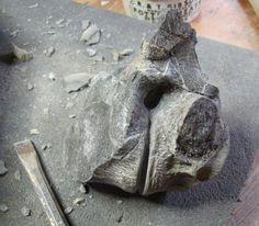Two fused Plesiosaur vertebrae from Dorset.