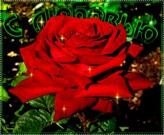 Красная роза с Любовью! - Цветы