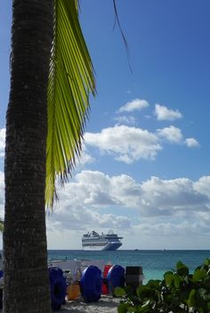 """Hanging Palm"",  Princess Cay (Nov 21, 2011)"