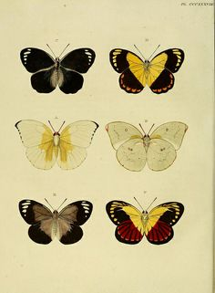 Now... if only I could figure out how to make a murrini that looked like one of these butterflies.