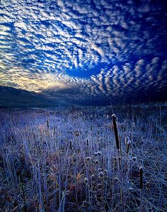 High clouds over a frosty swamp