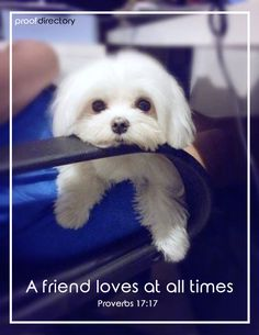 Top 5 Least Smelly Dog Breeds - Maltese is also considered hypoallergenic because of minimal shedding. seriously best dogs to have, I love my snowball. Animals And Pets, Baby Animals, Funny Animals, Cute Animals, Cute Puppies, Cute Dogs, Dogs And Puppies, Dog Pictures, Animal Pictures