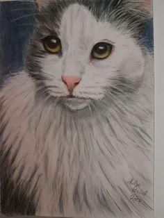 Coloured Pencils, Landscape, Portrait, Cats, Artwork, Animals, Color, Gatos, Art Work