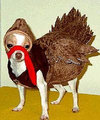 15 Photos of Dogs Dressed as Turkeys and Pilgrims for Thanksgiving