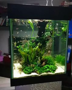 42 Astonishing Aquarium Design Ideas For Indoor Decorations - An aquarium is an enclosure with at least one clear side that houses water-dwelling fish, plants and other livestock and decorations. An aquarium offe. Aquarium Setup, Aquarium Design, Aquarium Nano, Tropical Fish Aquarium, Tropical Fish Tanks, Aquarium Aquascape, Aquarium Fish Tank, Saltwater Aquarium, Fish Tank Decor