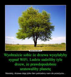 Wyobraźcie sobie że drzewa wysyłałyby sygnał WiFi. Ludzie sadziliby tyle drzew, że prawdopodobnieuratowaliby planetę – Niestety, drzewa dają tylko tlen potrzebny nam do przeżycia... Stupid Memes, Funny Memes, Whats Wrong, Bad Mood, Wtf Funny, Sad Quotes, Best Memes, Funny Photos, Climate Change