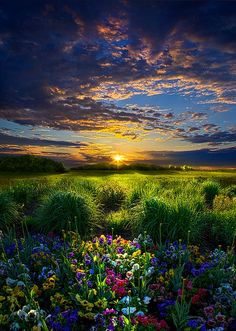 A beautiful sunset and a big field of wildflowers,what an excellent combo!