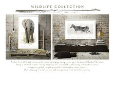 Wildlife Collection by Francoise V Beautiful Creatures, Fine Art Photography, Wilderness, Giclee Print, Art Gallery, Wildlife, Artwork, Nature, Prints