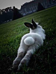 white rabbit Lord Of The Manor