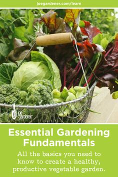 Have you always wanted to learn how to grow your own food organically?  Gardening is a great way to stay active and grow extra food for your family, especially now. I'll teach you everything you need to know to start growing your own food.  Learn how to grow a thriving edible garden in my online gardening course - Essential Gardening Fundamentals. #growfood #growyourownfood #organicgardening #gardeningbasics #learntogarden #gardeningbasics #fundamentalsofgardening #gardeningcourses Vegetable Gardening, Organic Gardening, Gardening Courses, Stay Active, Grow Your Own Food, Edible Garden, Organic Vegetables, Compost, Mother Nature