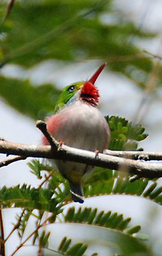 Cool website from Cornell University. Click on a species, then listen to the bird.