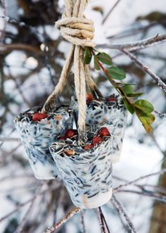 Brighten up your winter yard with a few DIY bird feeders! These winter bird feeders are super easy to make, and the birds will love the winter snack! Don't miss making a few DIY bird feeders!