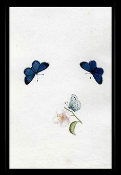 """Holly Blue Butterfly"" {Celastrina argiolus} by Katherine Plymley."