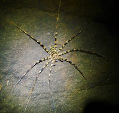 Damn it if the Khasi Hills aren't full of giant spiders. Spider Legs, Giant Spider, Spiders, Cave, Amazon, Book, Green, Check, Amazons