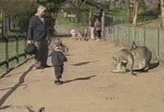 Kid gets kicked by a kangaroo. Funny animal GIFs