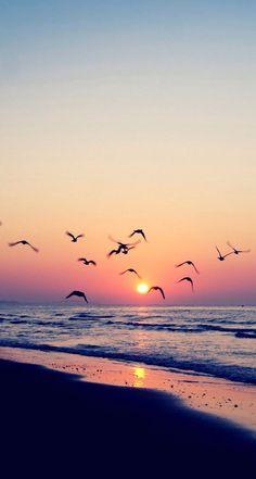 Sunset. Nature. Birds. Calmness. iPhone wallpaper