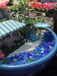 beach fairy garden  | veggies, fruiting trees and small fruits