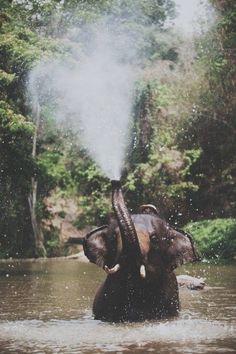 elephant blowing water