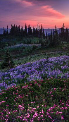 ✯ Pastel splendor in the Nisqually Valley of Washington