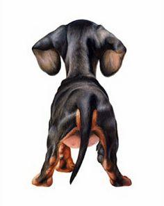 I Dachshund Dogs, Doxie S, Dachshund Butt, Dachsie Butt… Basset Dachshund, Dachshund Funny, Arte Dachshund, Dachshund Gifts, Mini Dachshund, Daschund, Weenie Dogs, Doggies, Hotdog Dog