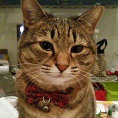 「おはにゃーん❗good morning to all❗  #ねこ #猫 #猫写真 #ネコ #しましま軍団 #きじとら #きじねこ #キジトラ #キジネコ #cat #catstagram #instacat #kitty #neko #tabby #meow #고양이」