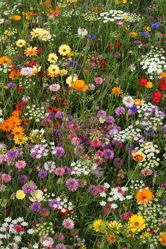Flowers Nature, My Flower, Wild Flowers, Beautiful Flowers, Nature Aesthetic, Flower Aesthetic, Molduras Vintage, Wild Flower Meadow, Wildflower Seeds