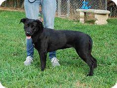 Louisville, KY - Labrador Retriever. Meet DIOR, a dog for adoption. http://www.adoptapet.com/pet/13767544-louisville-kentucky-labrador-retriever