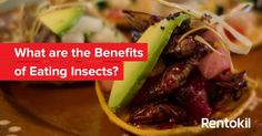 What are the health benefits of edible insects