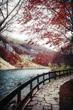 yelenabworld:  elenamorelli:  { autumn walk }   Spettacolo….