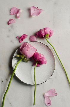 modern art floral nursery art ranunculus art pink by dullbluelight Dreamy Photography, Floral Photography, Floral Nursery, Floral Wall Art, Rose Like Flowers, Botanical Prints, Floral Prints, Ranunculus Flowers, White Decor