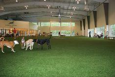 Unleashed Indoor Dog Park – Project Love Your Dog – pet resort Dog Boarding Kennels, Pet Boarding, Dog Kennels, Animal Boarding, Indoor Dog Park, Dog Kennel Designs, Kennel Ideas, Dog Playground, Dog Kennel Cover