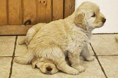 tumblr_lu734pudz71qa8gt7o1_500 Duz you know where my doggie pal iz?