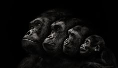 Family by Pedro Jarque Krebs on 500px