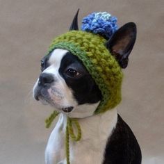 Adorable hat and tolerant dog.