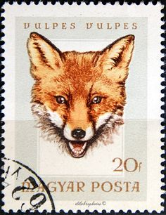 European red fox (Vulpes vulpes) trophy, designed by Hungarian artist Ferenc Gal, printed by photogravure, and issued by Hungary on July Scott No. Vintage Fox, Fox Face, Little Fox, Red Fox, My Stamp, Hare, Postage Stamps, Crow, Country