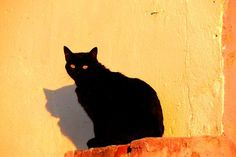 Black cat on orange field Photo by Lauro Winck -- National Geographic Your Shot