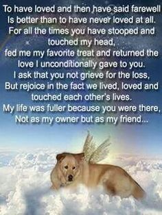 Forever missing you... Ginger, Dutchess, Carmie, Danzig, Chelsea, Malibu, Fonzie and Ceasar.