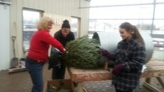 Bagging a #Christmas tree