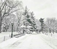 Central.Park