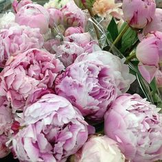 Peonies from the flower market